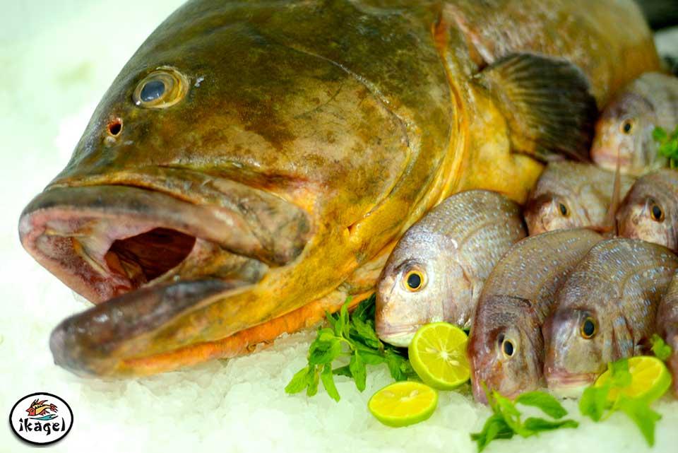 Produit Ikagel poissons divers